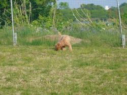草を食べてる!