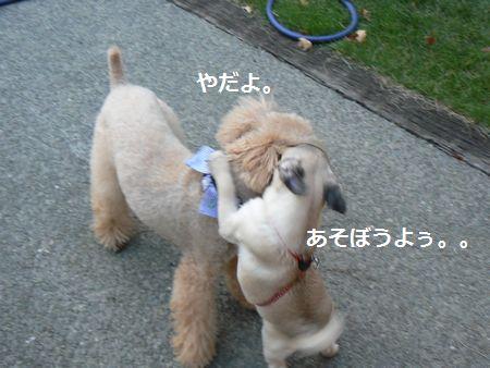 2_20100905212936.jpg