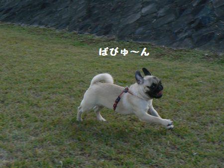 2_20101027212437.jpg