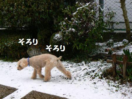 3_20110308105532.jpg