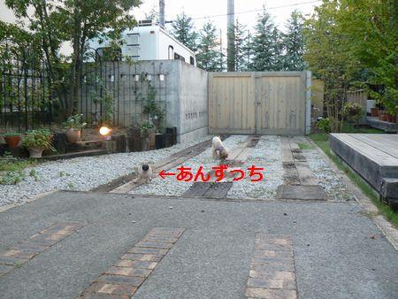 4_20100905212935.jpg
