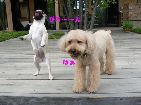 4_20101008191710.jpg