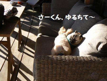 5_20110120210911.jpg
