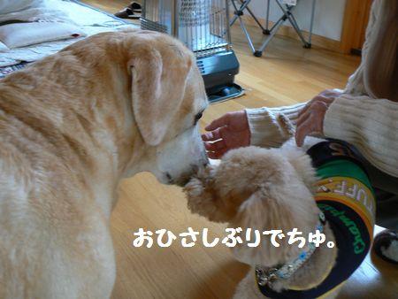 5_20110505201359.jpg
