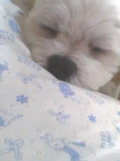 眠いね~タロスケzzz
