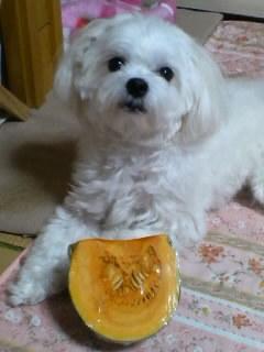 かぼちゃとタロスケ君・・・