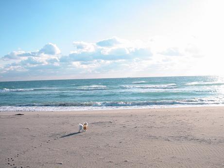 海は大好きです。。。