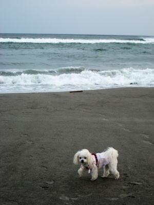 海は大好き♪