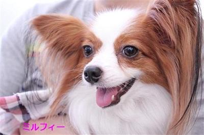 マリくるちゃんのお誕生日