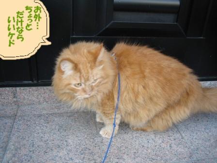kousuke46