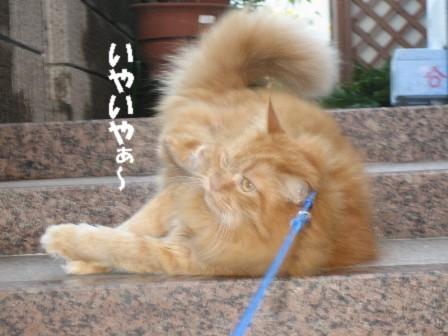 kousuke48