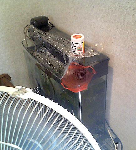 水槽+扇風機
