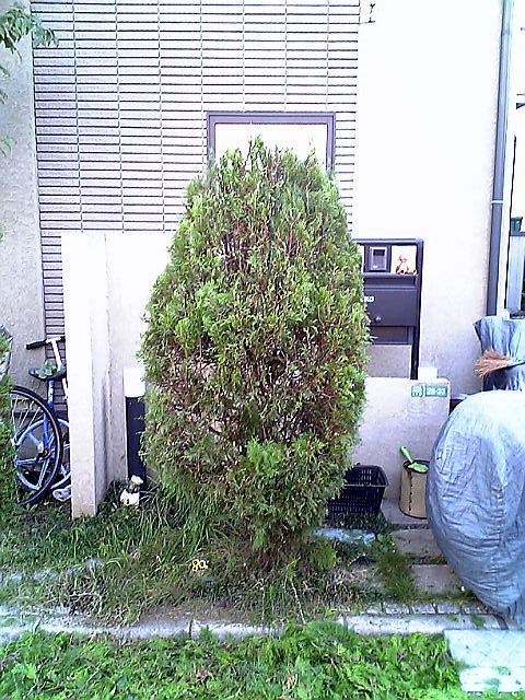 植木剪定後