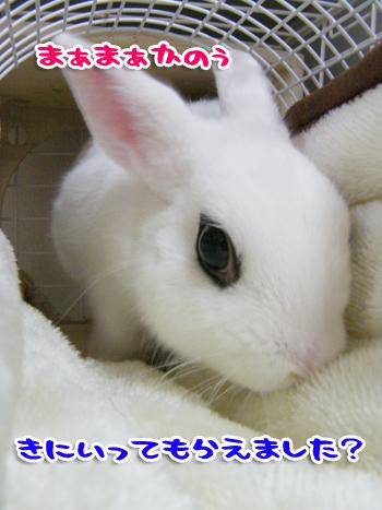 モコモコ2