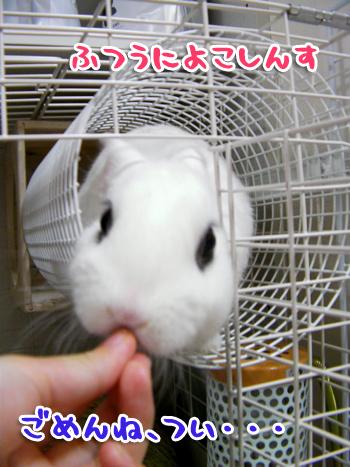 にょろ?ん5