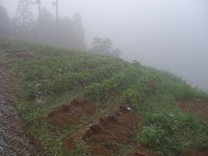 朝方の畑の風景
