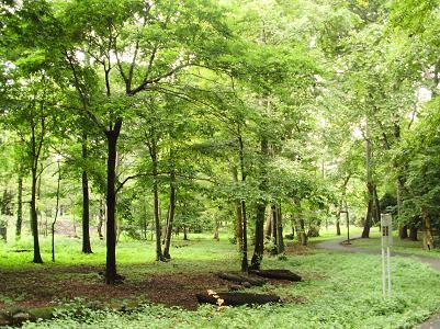 200905代々木公園景色2