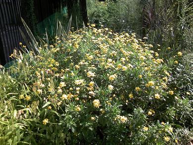 200912黄色草花