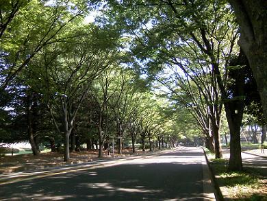 200912駒沢公園並木通り