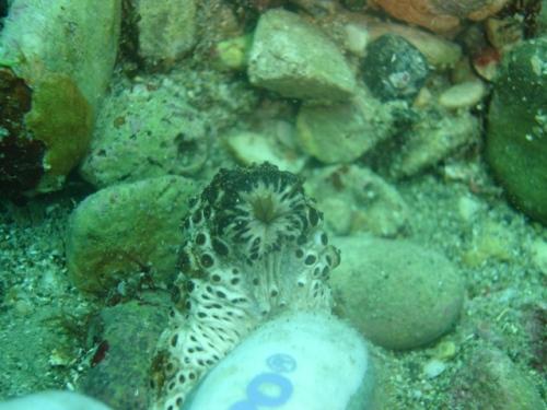 コピー ~ 2008年5月17日ダイビング和歌山海洋公園 013