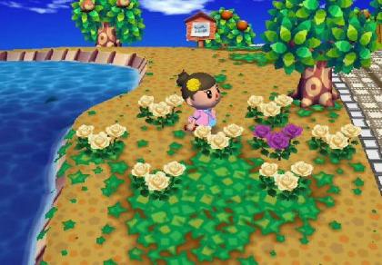 090319交配花