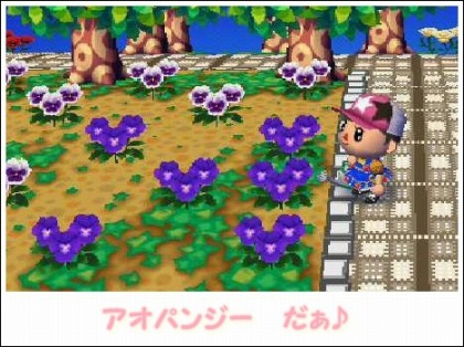 0903交配花