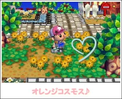 090323交配花