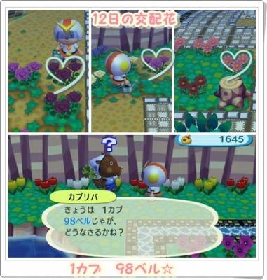 12日の交配花