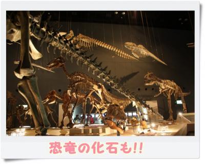 恐竜の化石コーナー