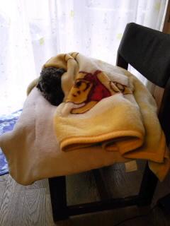 マーブル毛布に包まれて