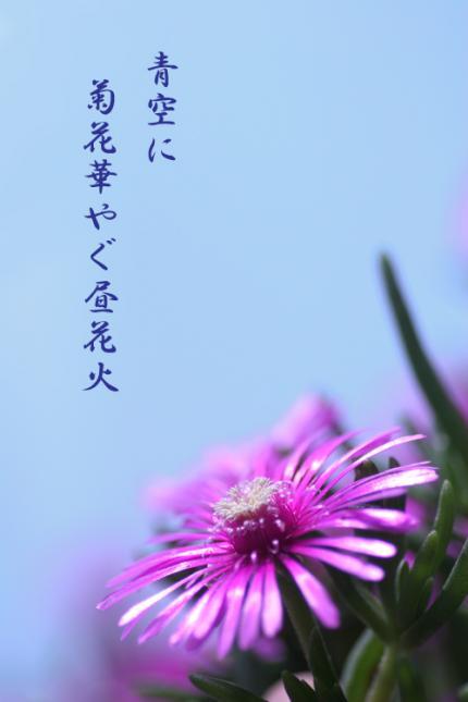 IMG_1690_edited-1_convert_20080822024037.jpg