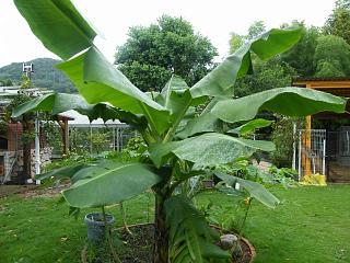 banana2gou0819 1