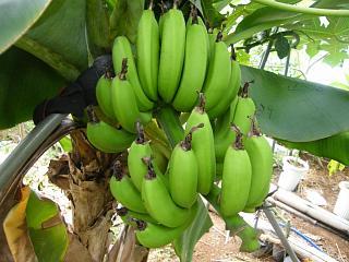 banana3gou0915