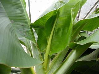 banana2gou 0916 1