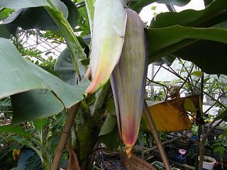banana0926 1