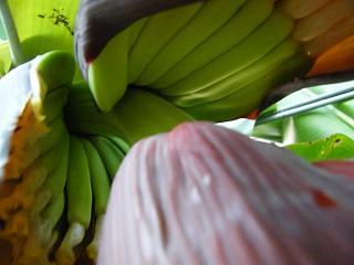 banana2gou0927 2