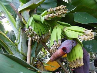 banana2gou1001 2