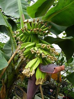 banana2gou1003 2