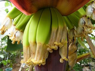 banana2gou1003 3