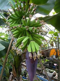 banana2go1004 2