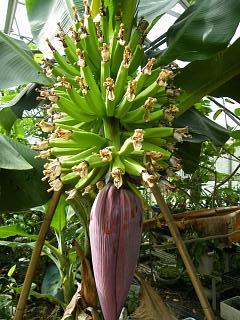 banana2gou1006 1