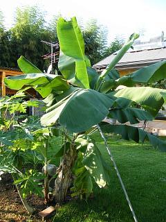 banana0920_20080920172841.jpg