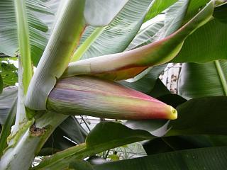 banana2gou0923.jpg