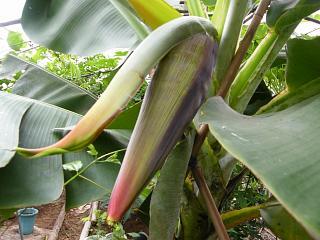 banana2gou0924.jpg