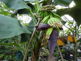 banana2gou1001.jpg