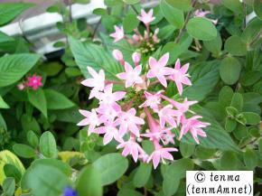 tenmaphoto0002.jpg
