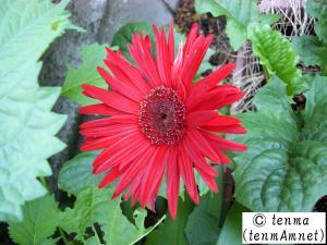tenmaphoto0003.jpg