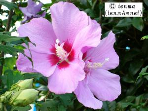 tenmaphoto0008.jpg