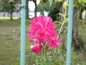 tenmaphoto0011.jpg
