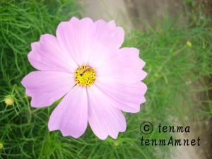 tenmaphoto0017.jpg